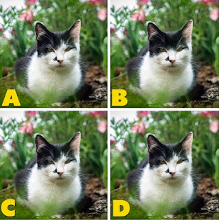 Which image is different? image 31