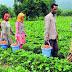 কৃষি দপ্তর এর নতুন নিয়োগের বিজ্ঞপ্তি প্রকাশিত হয়েছে  (Agricultural Dept Recruitment Govt Job Official Notice 2021)