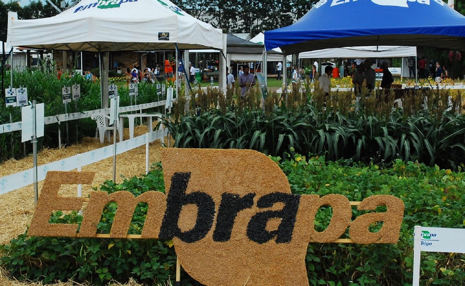 Lucro social da Embrapa chega a R$ 46,49 bilhões; balanço é de abril