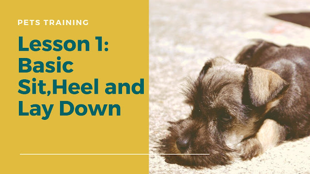 Dog Training Basic Sit,Heel and Lay Down