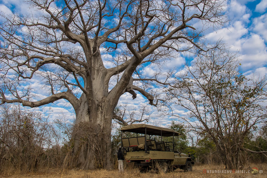 Safari en South Luangwa, Zambia