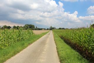 Corn, corn and corn