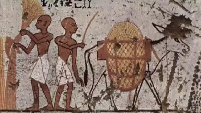 Ancient Egyptian Donkey
