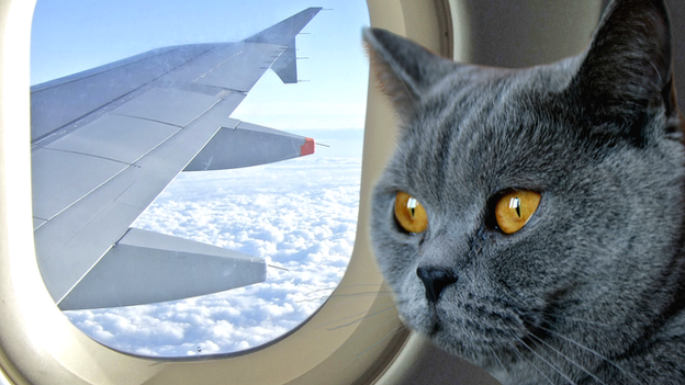 how to bring a cat on a plane