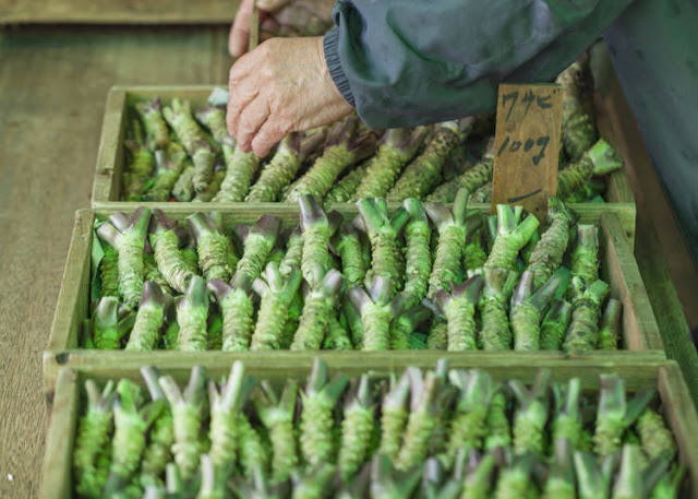 wasabi tươi