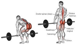 Top 5 Exercises For Building Lehs, Deadlift