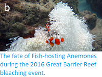 https://sciencythoughts.blogspot.com/2017/12/the-fate-of-fish-hosting-anemones.html