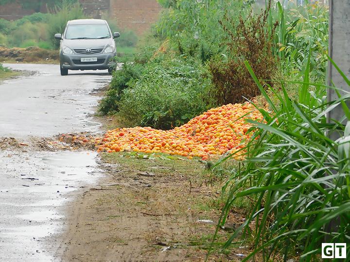 tomato-photo