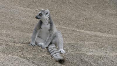 A_Incrivel_Madagascar_episodio_Espirito_Lemure_Credito_Divulgação_TV_Brasil