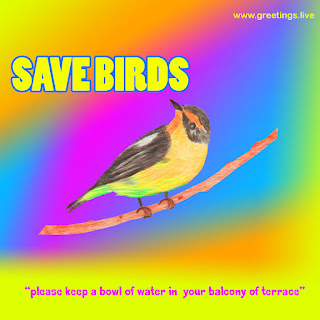 save birds from summer