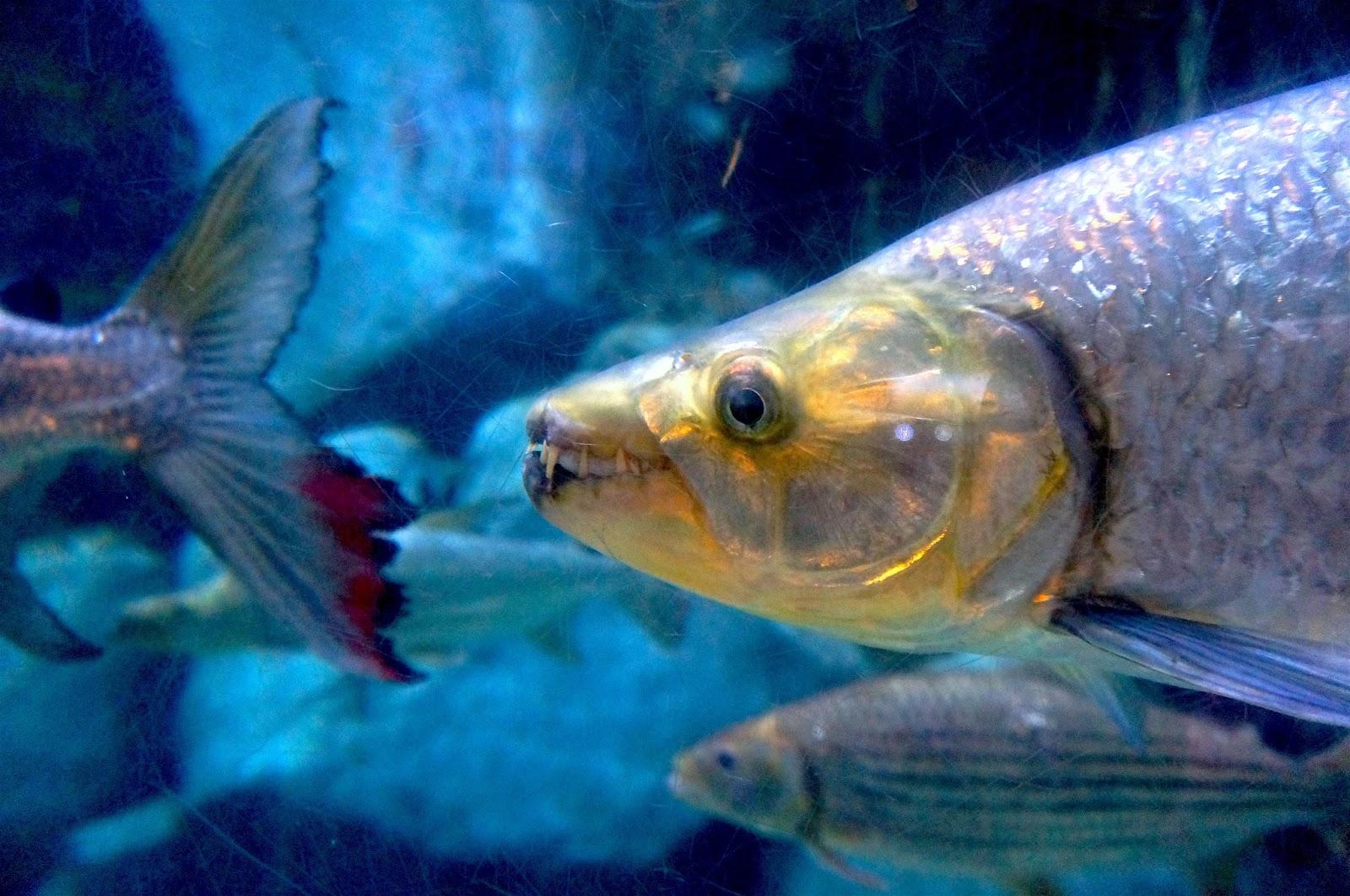mnóstwo witryn randkowych z rybami Australia