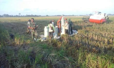 Sahala Situmorang Senang Didampingi Babinsa Saat Panen Padi di Desa Pertahanan