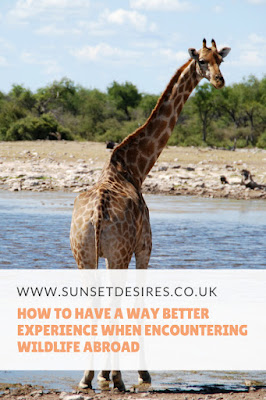 https://www.sunsetdesires.co.uk/2018/05/how-to-have-way-better-experience-when.html