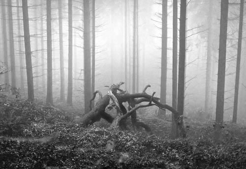 dirty blog - highlights - Landscape