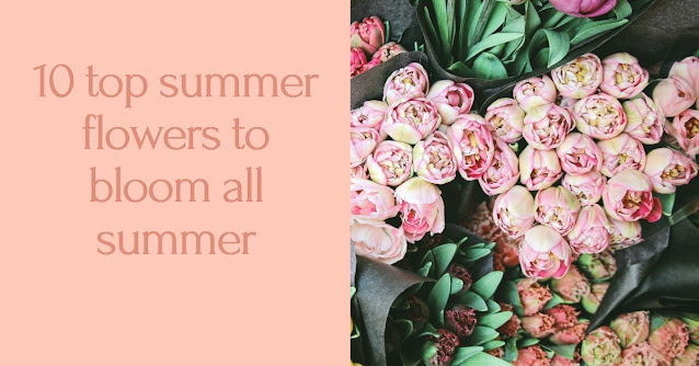 10 top summer flowers to bloom all summer
