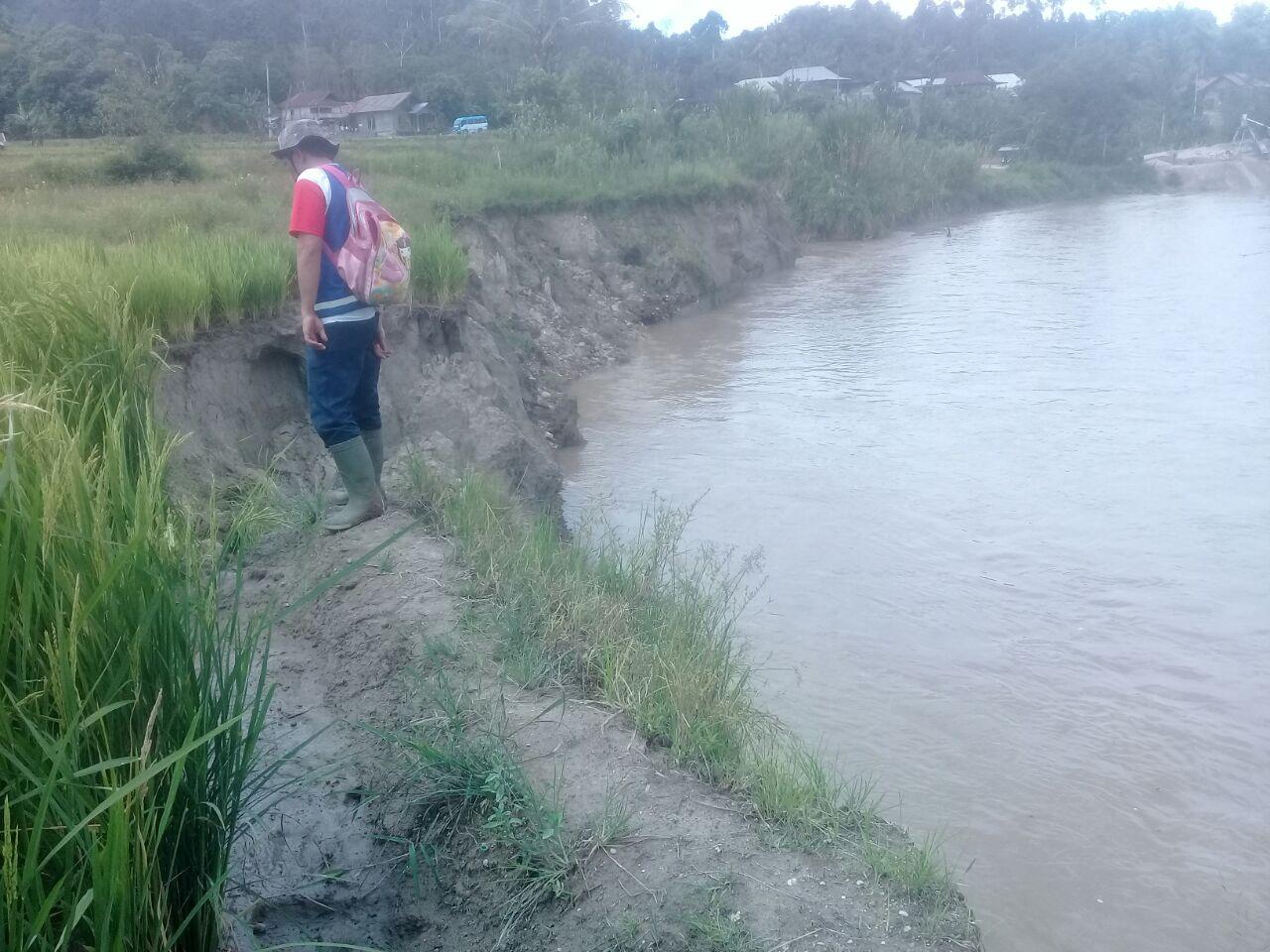 Sungai Waysemangka Darurat Erosi