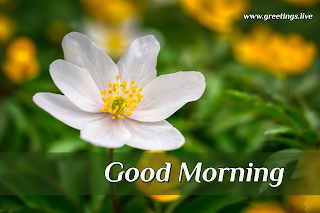 White flowers good morning greetings images