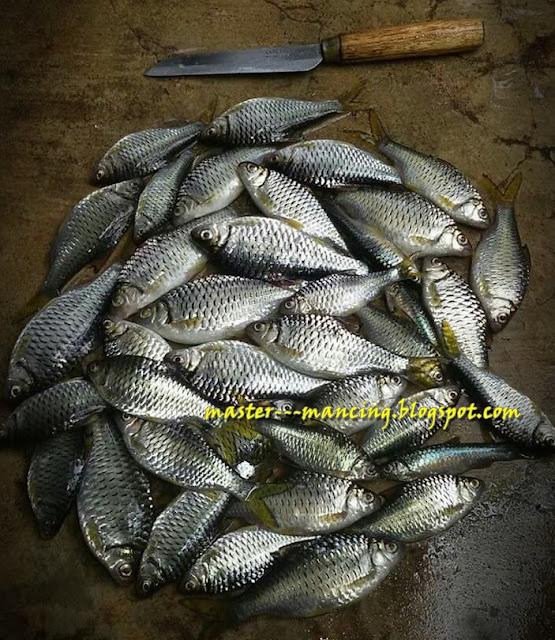 Rahasia Mancing ikan Putihan Dan Umpan Jitu dan Ampuh