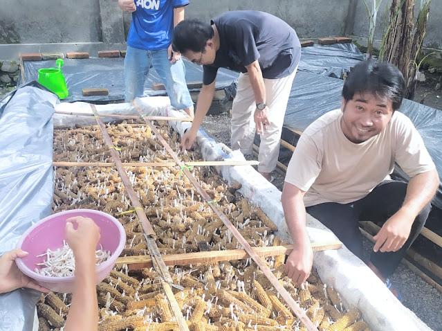 Wow! Budidaya jamur janggel di lahan sempit raup omset jutaan rupiah