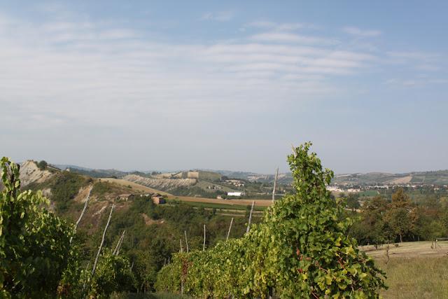 Bologna, Valsamoggia - Viinitarhoja ja koirahommia 36