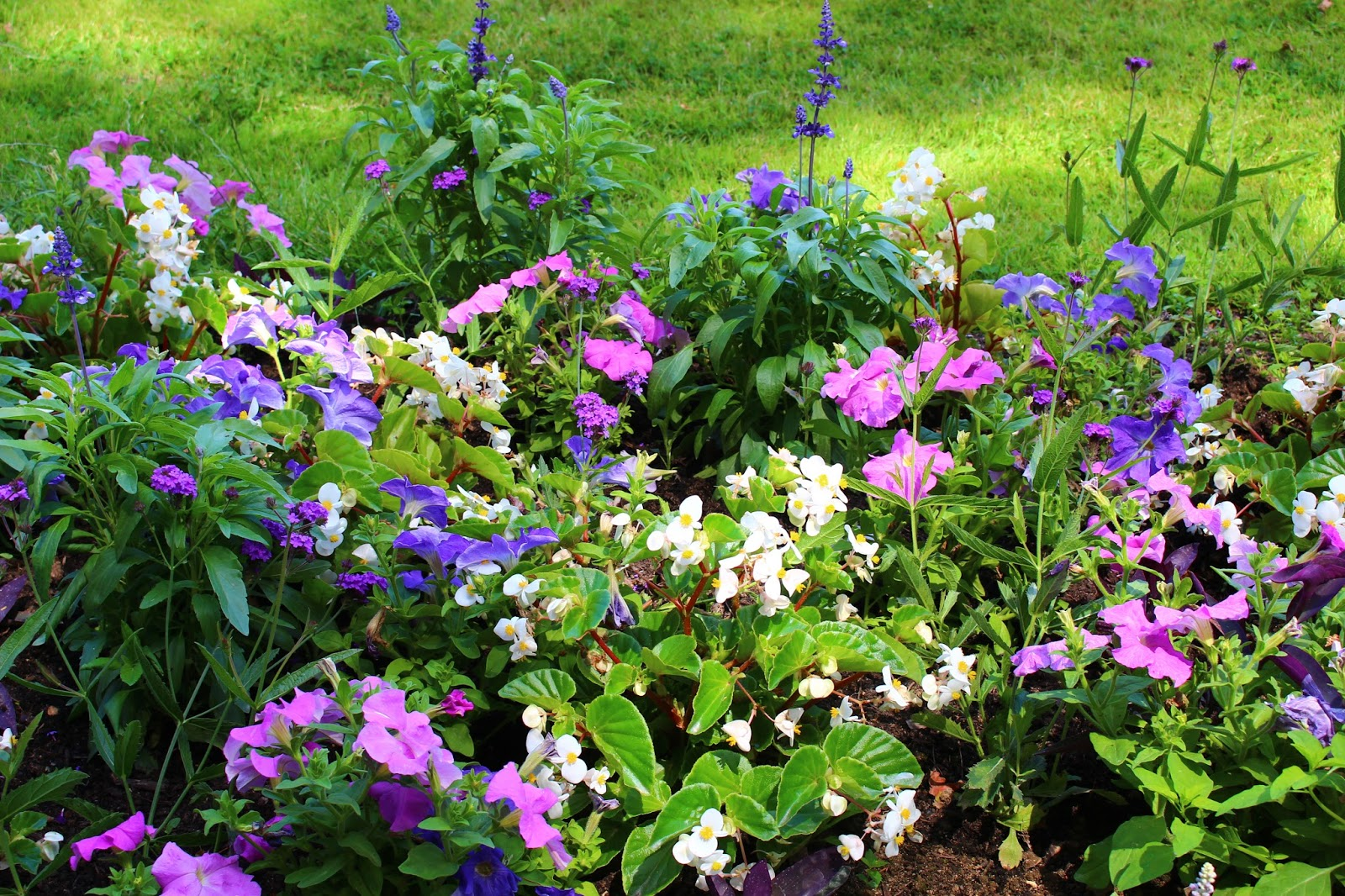 Roses Du Jardin Cheneland Jardin De Catherine De Medicis A Chenonceau
