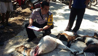 Anjing Liar Pemangsa Kambing Berkeliaran di Gunung Kidul
