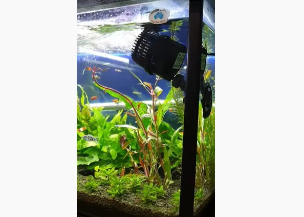 How to Setup Fish Tank Wavemaker & Filter