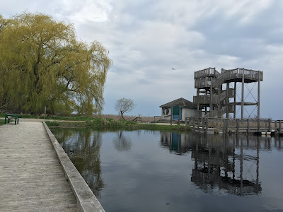 Marsh Boardwalk - Observation tower - Point Pelee
