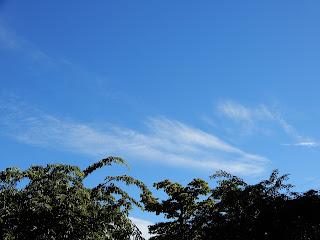 等々力渓谷の展望台から見る空