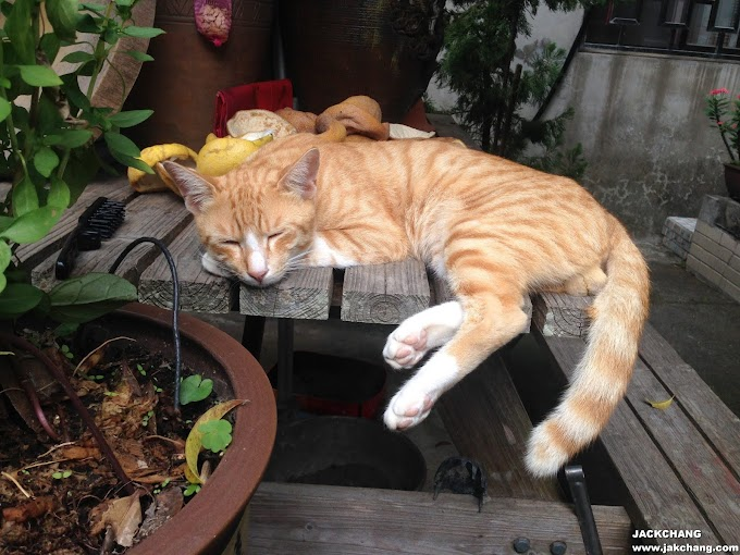 悠閒的貓咪人生EP01-老家小花園