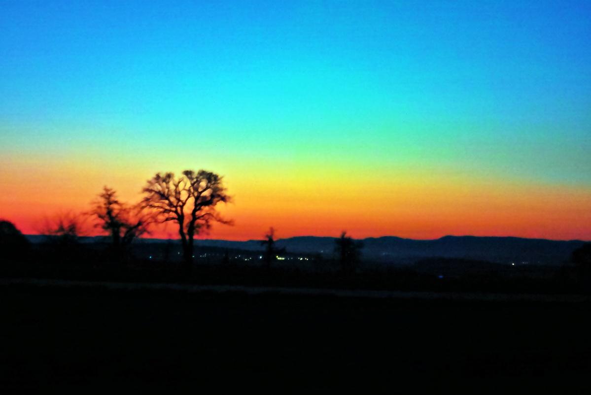 Birnbaum vor Sonnenaufgang