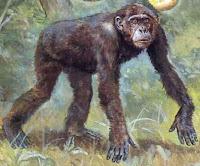 Ricerca sulle prime scimmie preistoriche, testo e immagini