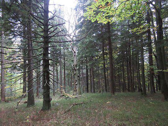 W lesie zrobiło się ciemno i ponuro.