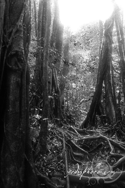 hover_share Eerie trees along the trail going up Mt. Pico de Loro