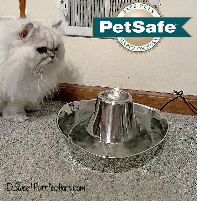 Silver Persian cat, looking at PetSafe water fountain