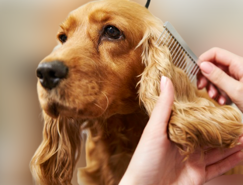 Pet Dog Care & Grooming