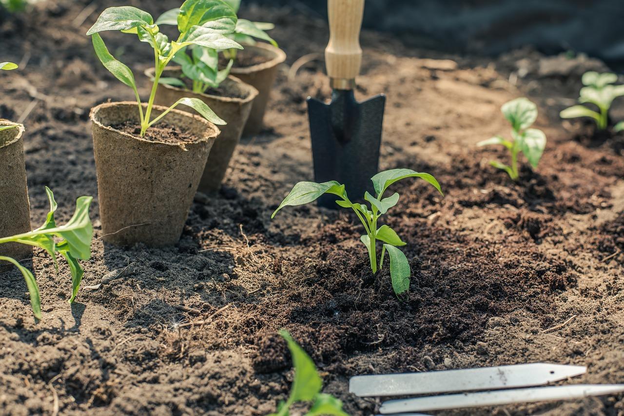 grown vegetables