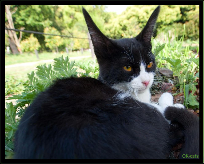 """Photoshopped Cat picture • Hilarious black cat with super long ears. """"I can't ear you human, can you speak loudly? """""""