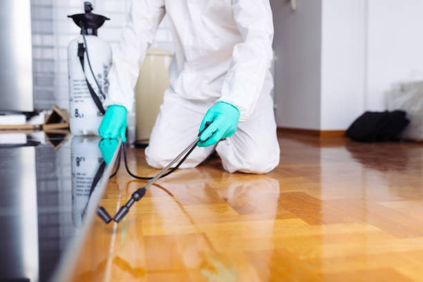 5 Ways Experts of Pest Control in Broadmeadows Can Help You to Restrict the Entrance of Coronavirus in Your Home