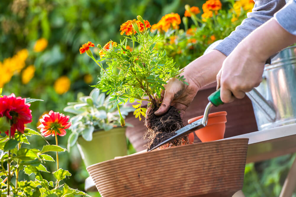 How to Choose the Best Plants for your Garden