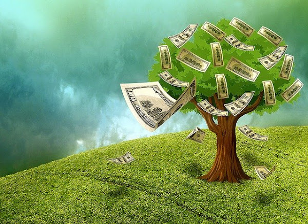 euro currency on tree