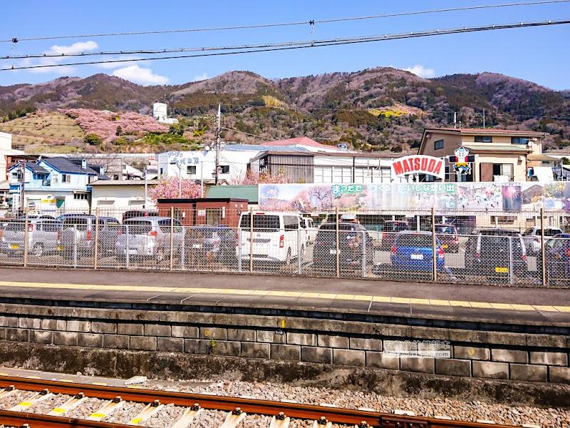 matsuda-sakura-1.jpg