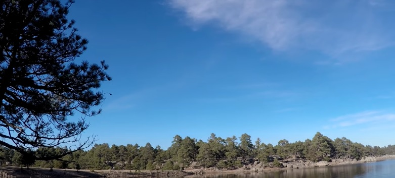 Lago en medio de un bosque