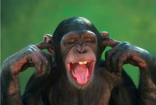 maimuta nu stie nu aude
