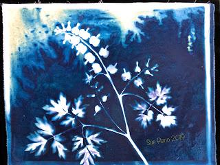 Wet cyanotype_Sue Reno_Image 600