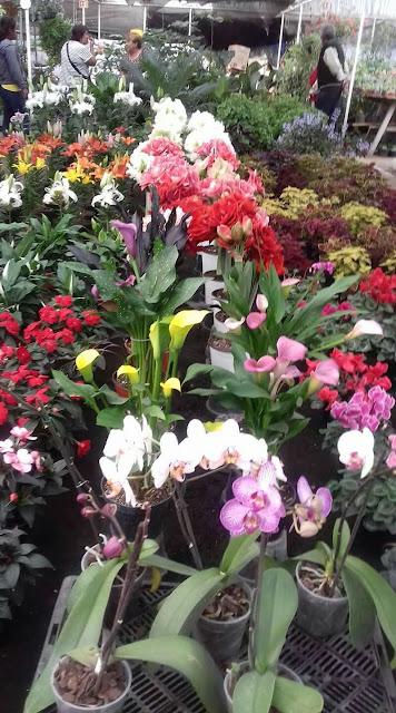 flowers inTrajineras Xochimilco, Mexico
