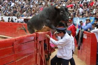 foto de toro saltando el ruedo