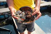 ВТаиланде погибла женщина отравившись ядовитым мясом мангрового мечехвоста — Popular Posts