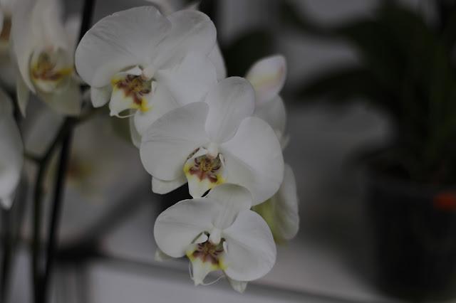 Exposición de orquídeas colombianas en la estación de Atocha