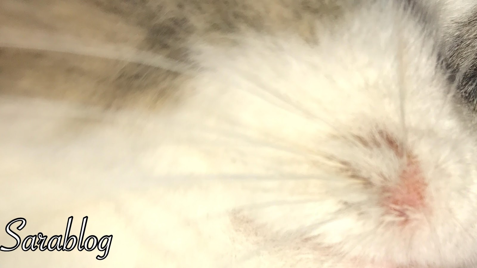 Sara Blog علاج فطريات القطط Feline Fungi